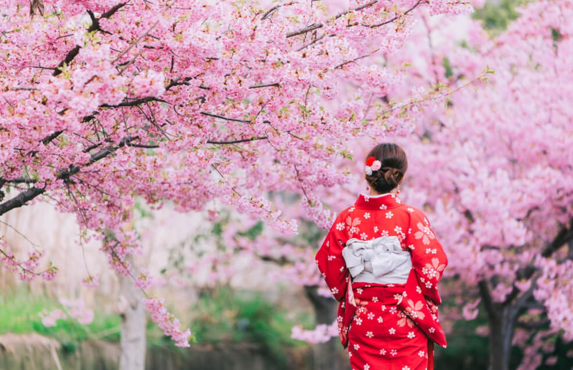 Japon Güzellik Tanrıça'sından Gelen Güzellik